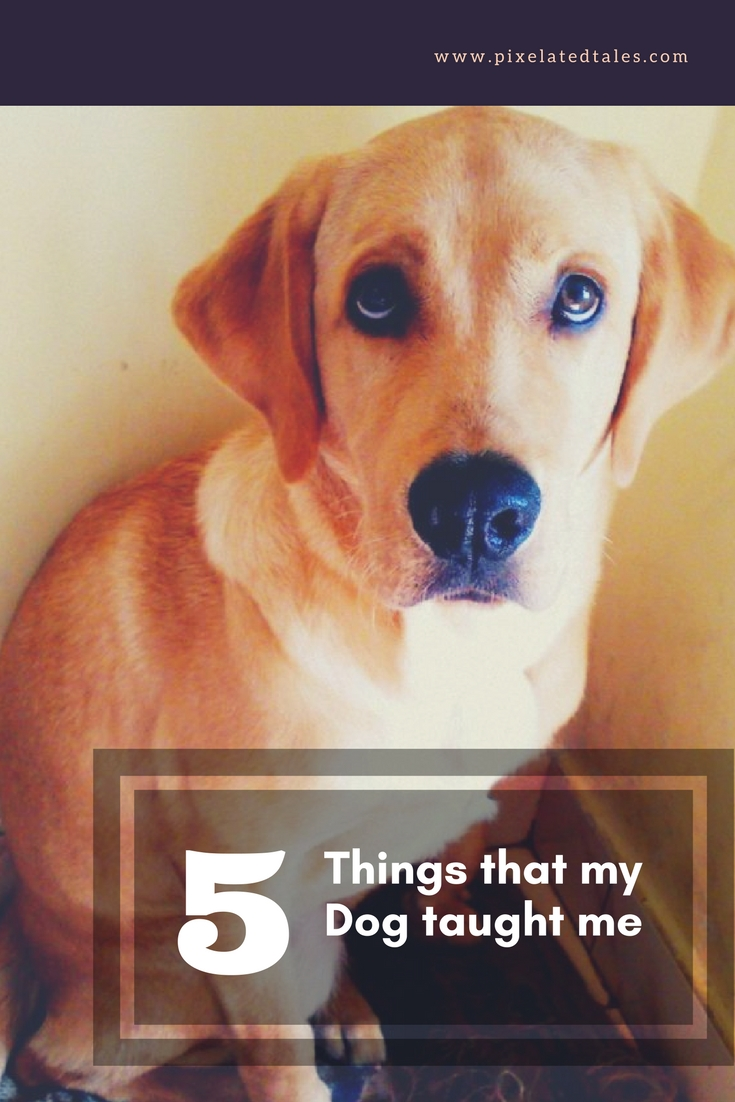 5 things that my dog taught me
